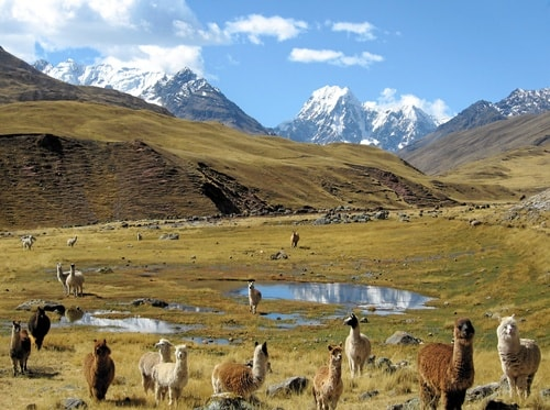 ADAPTATION FOR SUCCESS IN RURAL COMMUNITY TOURISM
