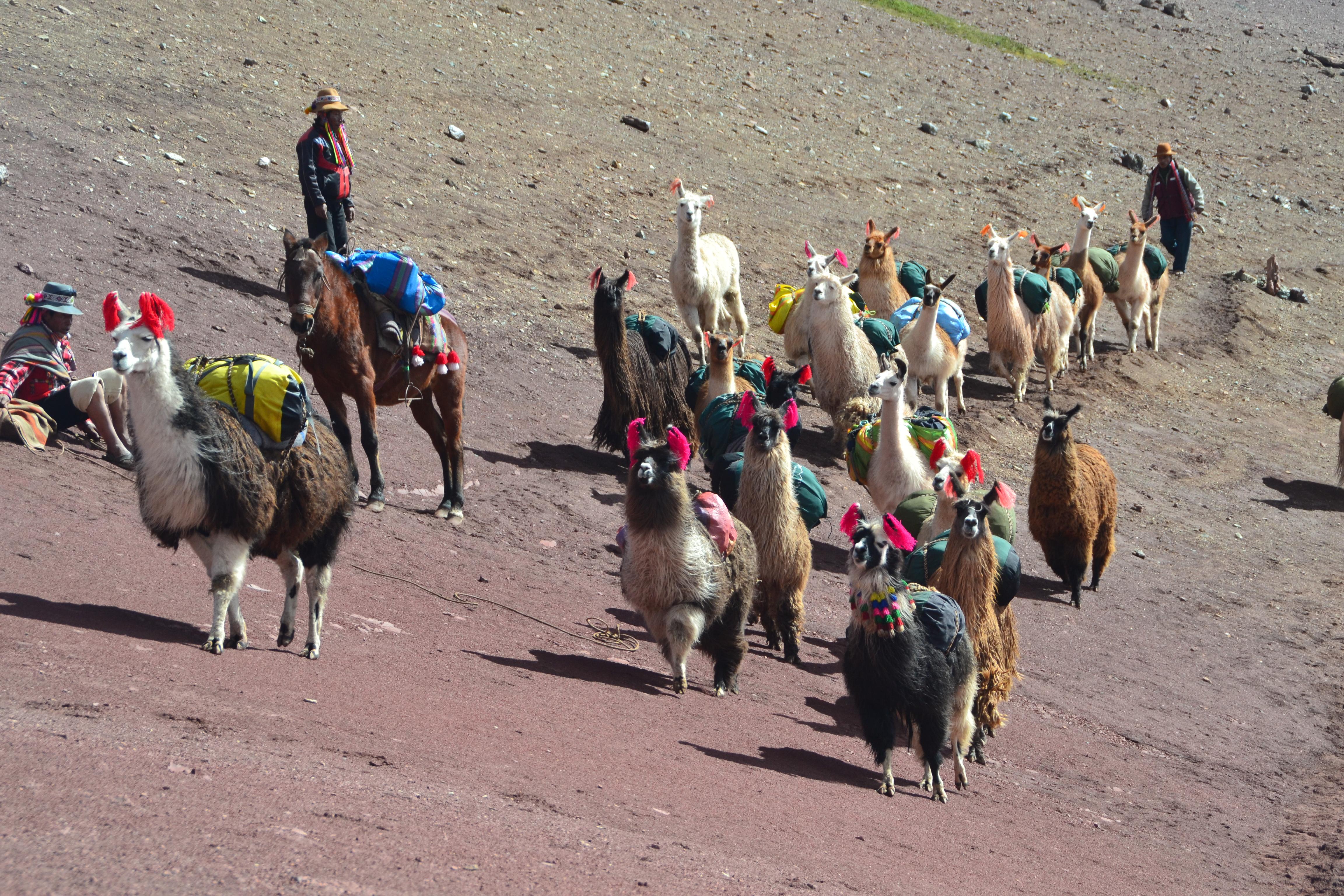 5 días en los Andes peruanos –  el Camino del Apu