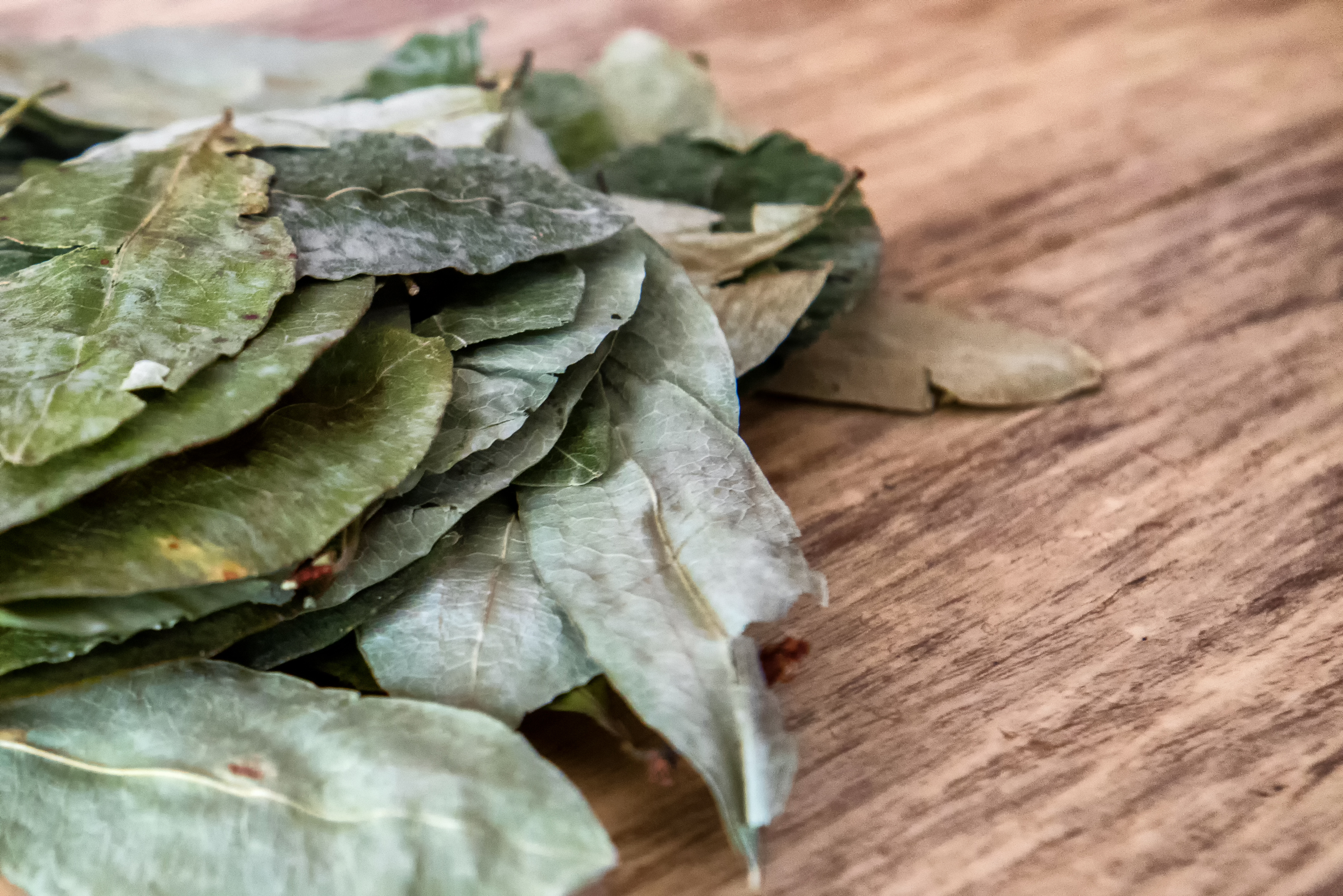 Coca Leaves: The Andean solution for altitude sickness