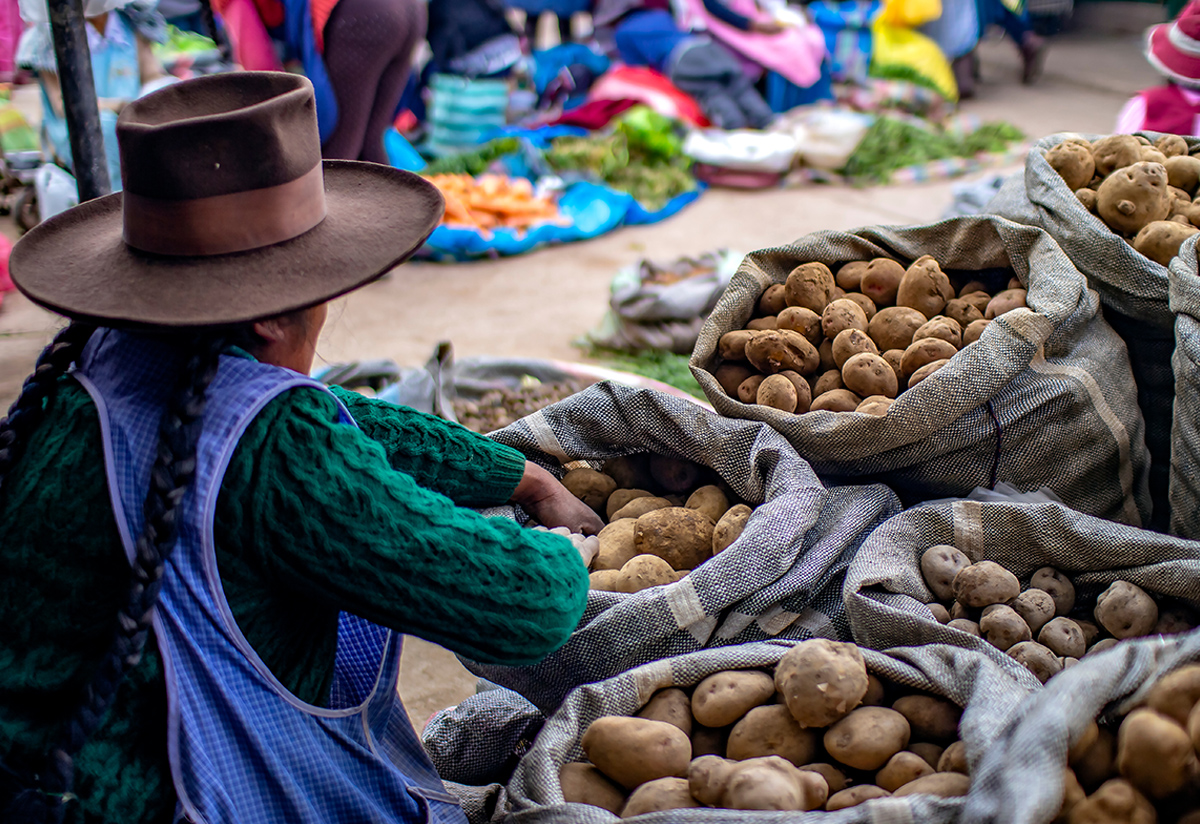 The Andes feed the world: Peru's Andes region is one of the world's leading potato and tomato producers