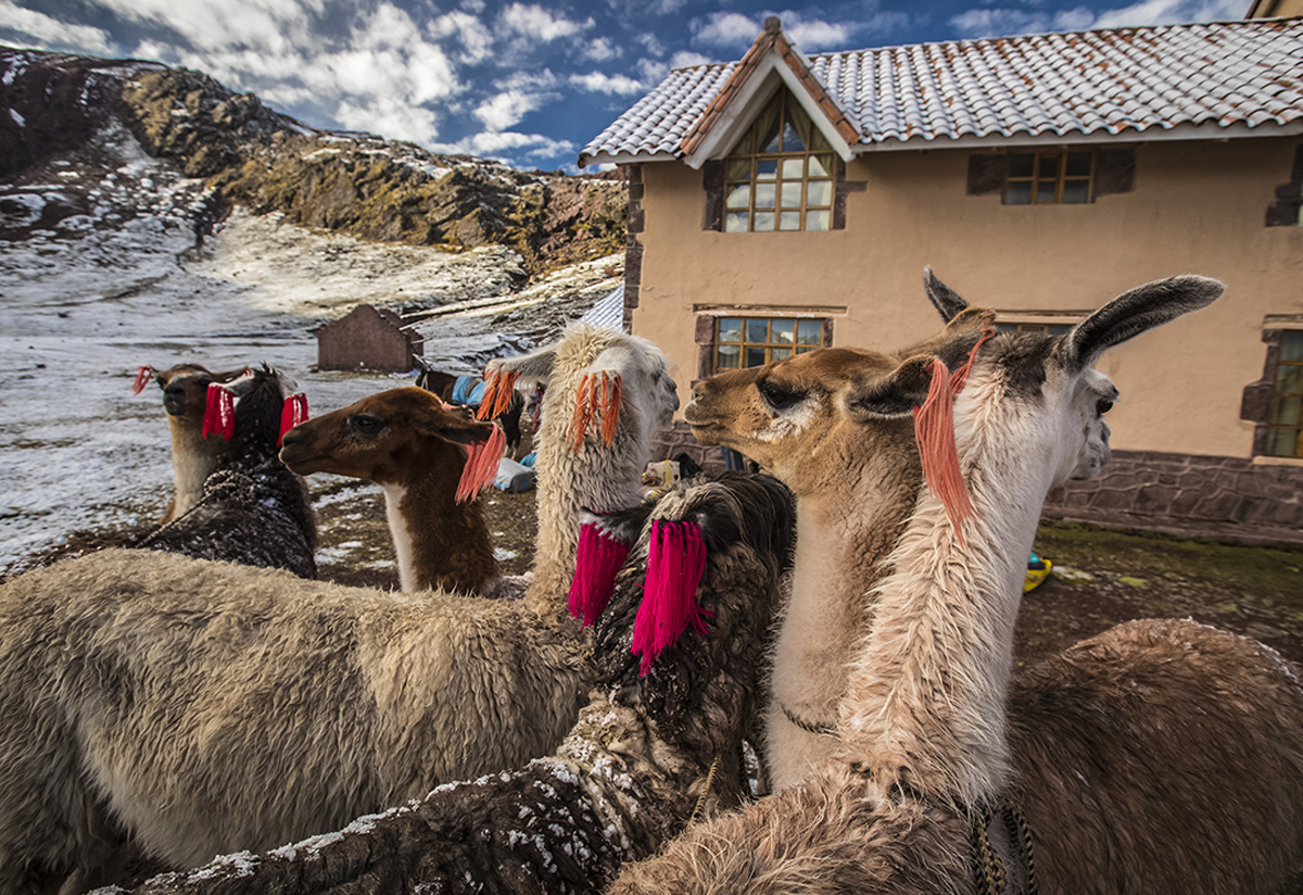 Andean animals in the ancient Inca and Pre-Inca religions